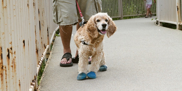 The Ins and Outs of Dog Shoes What Are the Advantages of