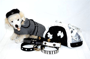 mybusydog-pet-supplies-dog-ready-for-anything