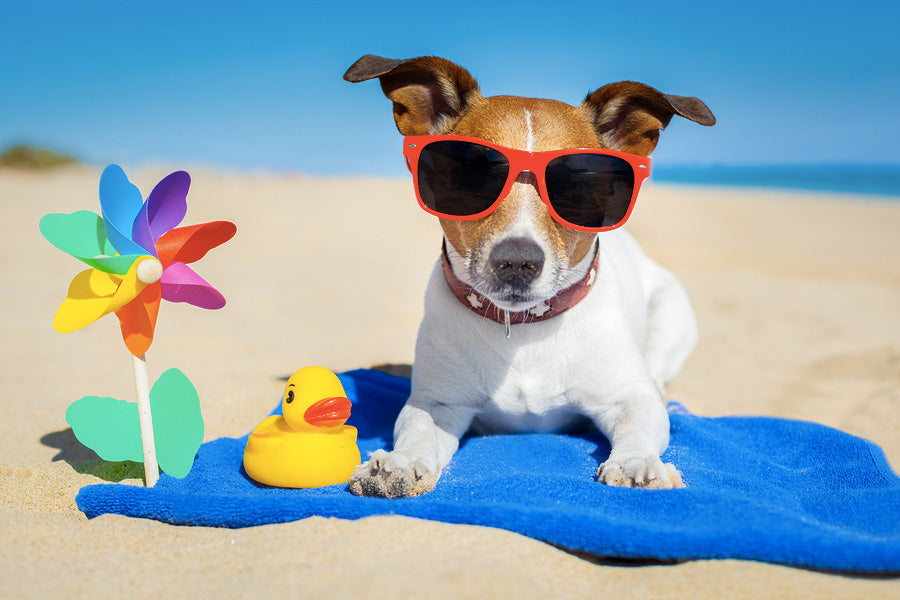 mybusydog-pet-supplies-dog-sunscreen