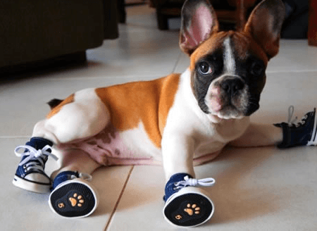 dog-shoes-brands