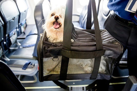 my-busy-dog-pet-supplies-air-travel