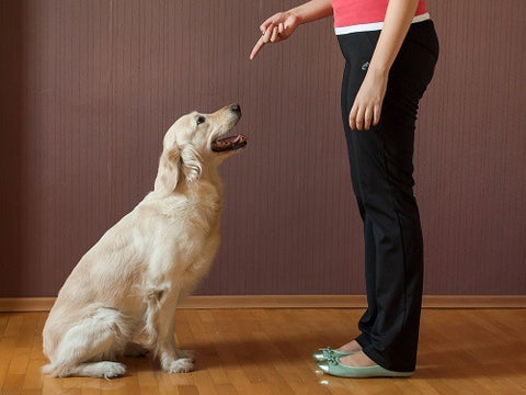 my-busy-dog-pet-supplies-easy-training-guidelines