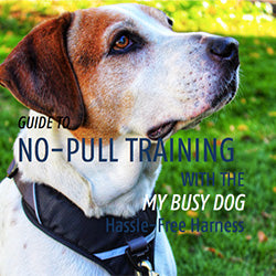 mybusydog-ebook-dog-training-no-pulling