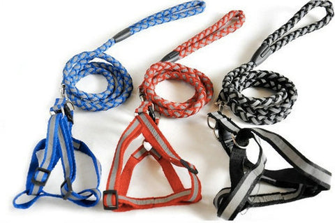mybusydog-pet-supplies-accessories-buying-guide