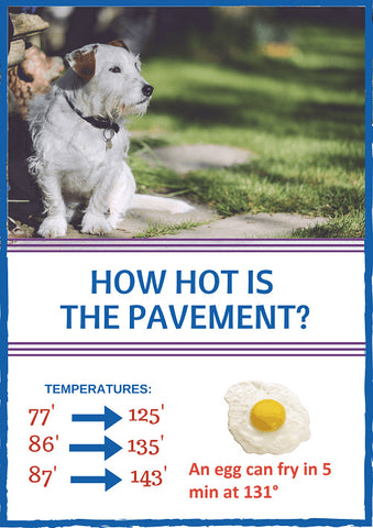 mybusydog-pet-supplies-dog-hot-pavement-hurt
