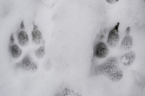 Protect Your Dog's Paws From the Dangers of Rock Salt