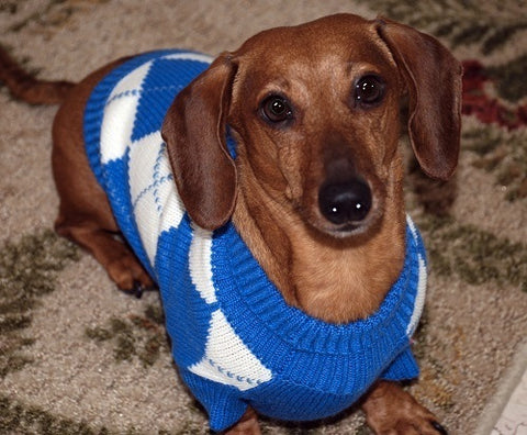 mybusydog-pet-supplies-dog-sweaters