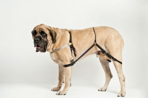 The Many Reasons Pet Owners are Flocking to Dog Harnesses - My Busy