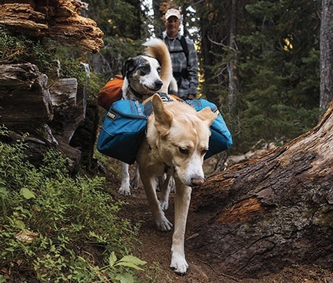 mybusydog-pet-supplies-hiking