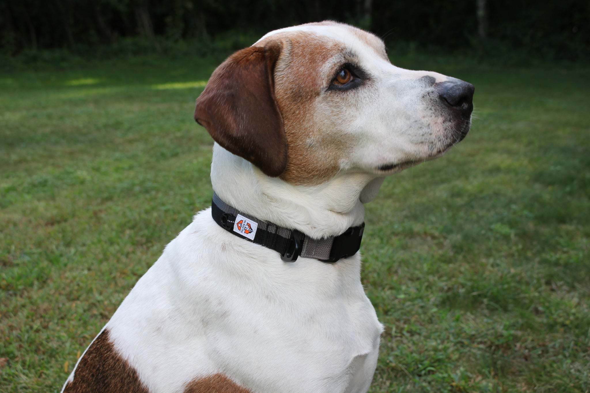 Nylon One-Click Dog Collar