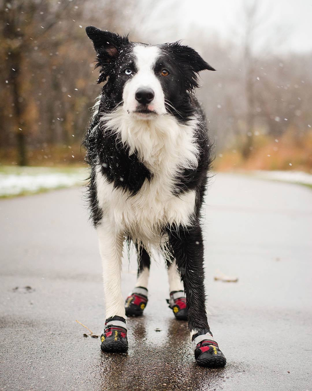 Secure Dog Boots - My Busy Dog - Dog Shoes for Large Dogs