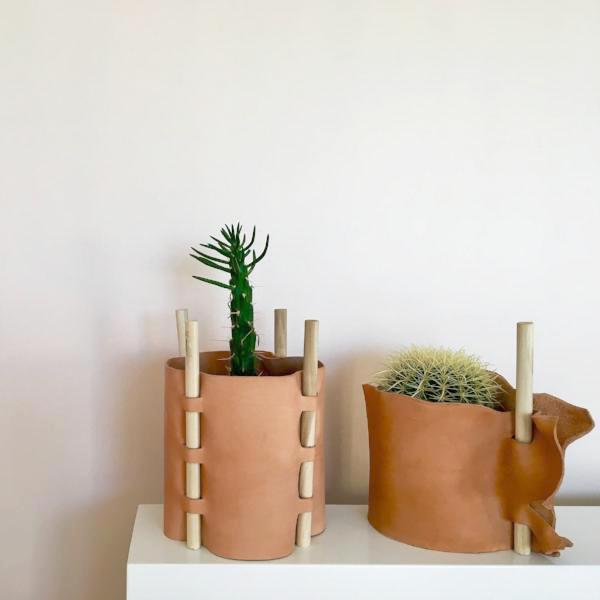 Anush Plant Cozy #1