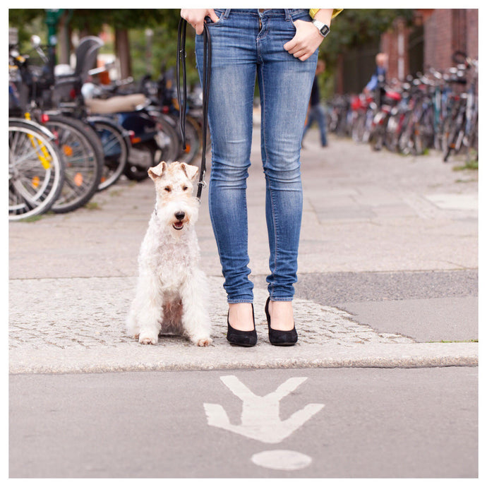 The Importance of Dog Walking