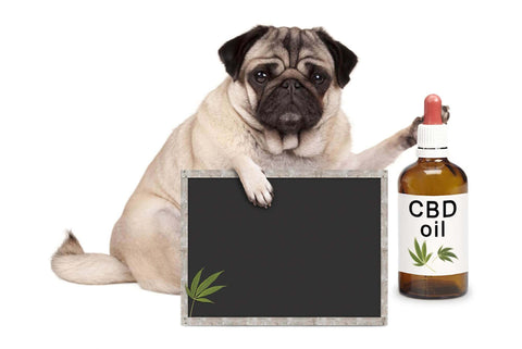 cbd for dog
