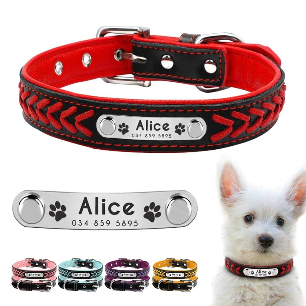 Personalized Padded Dog Collar with Customized Name and ID for Small Medium Large Dogs Cats