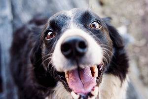 Your Pet's Pearly Whites -Pet Dental Health Month