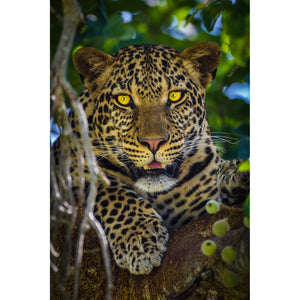 [High Quality Metal Prints & Acrylic Prints] - Level Fine Art