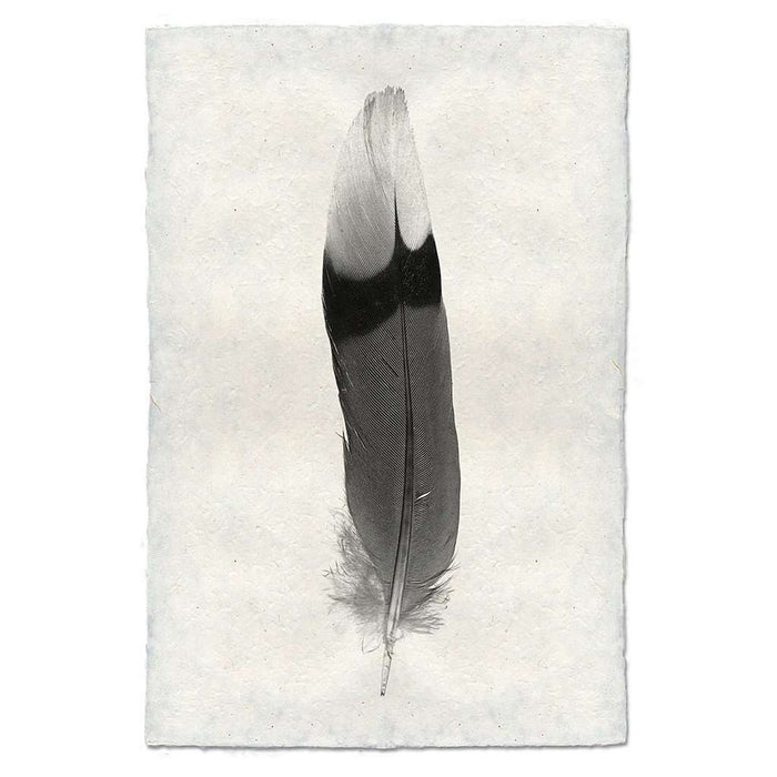 Feather Study #9 Print
