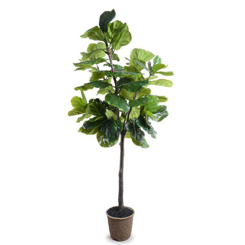 New Growth Design Ngd 18208 7 Fiddle Leaf Fig Tree
