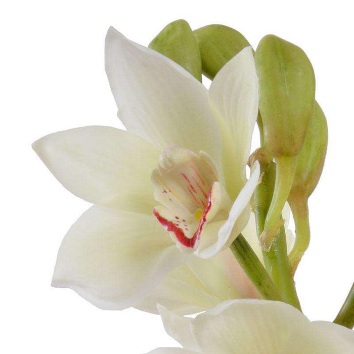 White Cymbidium Orchid Arrangement