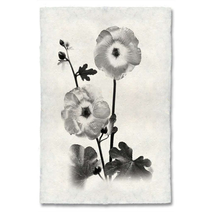Graphite Hollyhock Print - BARLOGA-GraphiteHollyhockPrint - Parent