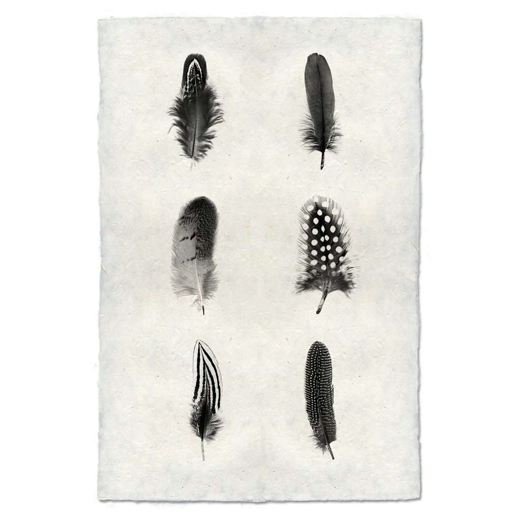 Feather Study Composite