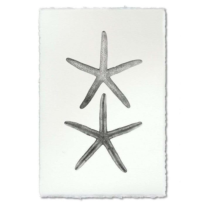 BARLOGA-DoubleStarfishPrint  - Parent - double starfish print