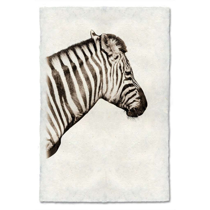 Zebra Profile Print - BARLOGA-ZebraProfilePrint - Parent