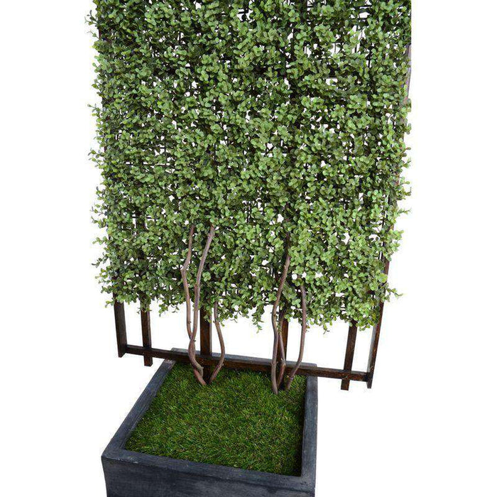 Boxwood Trellis in Column Pot