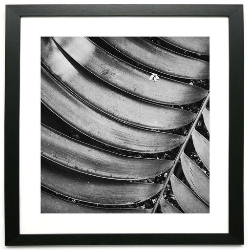 Veins of Another Time 1  - Limited Edition Framed Print