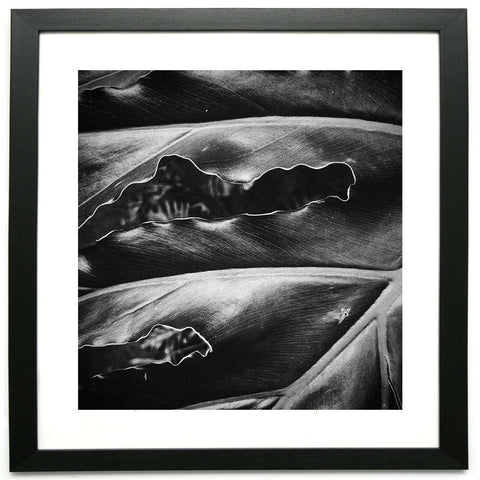 Veins of Another Time 3  - Limited Edition Framed Print