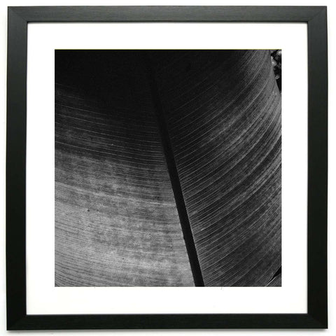 Veins of Another Time 4  - Limited Edition Framed Print