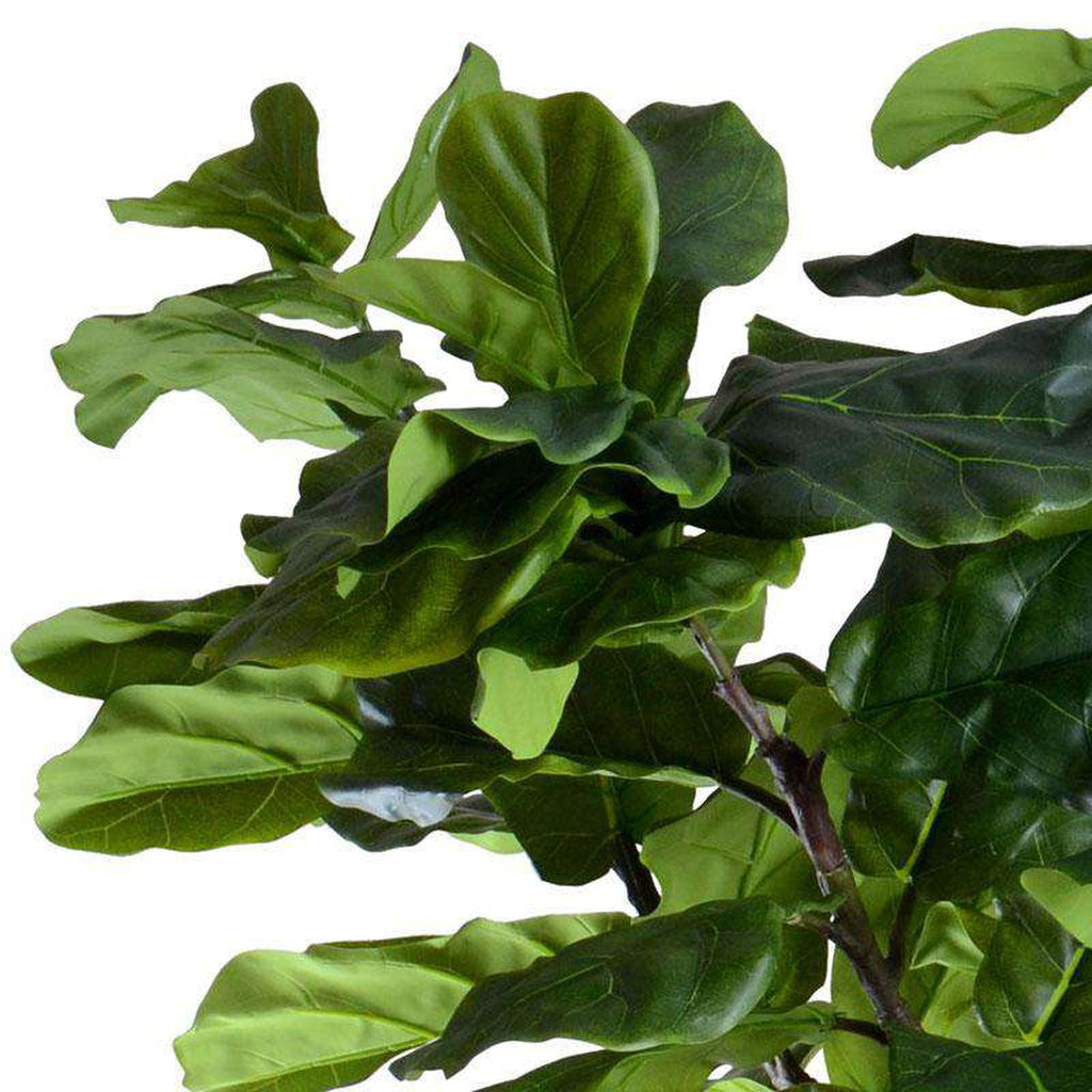 9' Fiddle-Leaf Fig Tree_1