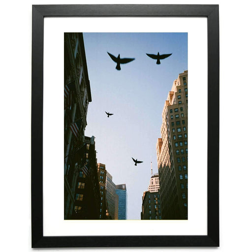 Birds Above - Limited Edition Framed Print