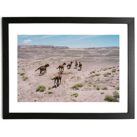 Wild Horses in the Kaibab Plateau - Limited Edition Framed Print