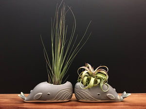 whale air plant vase / antique jade