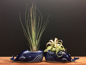 whale air plant vase / royal blue