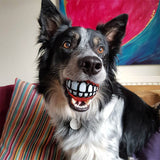 Smile Dog Ball
