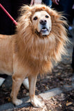 The Lion King Dog Costume