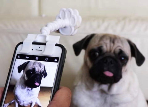 """Pet Selfie Stick shopify""的图片搜索结果"