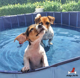 Portable Pet Pool™️