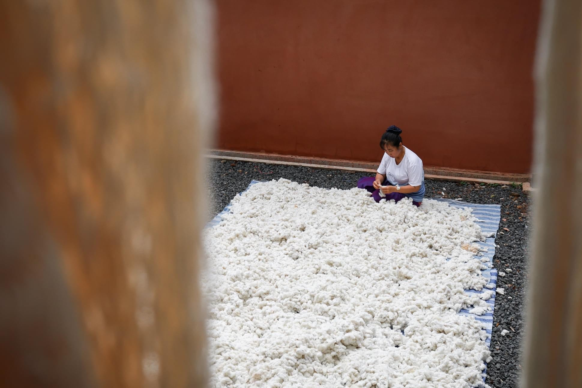 Woman sitting on the floor in a large space, separating the seeds from a large amount of cotton