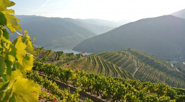 THE FARAH GUIDE TO VISITING THE DOURO