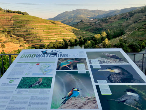 birdwatching at the Douro