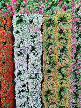 SAN FRANCISCO | Aerial Flower Farm |  Photographic Print
