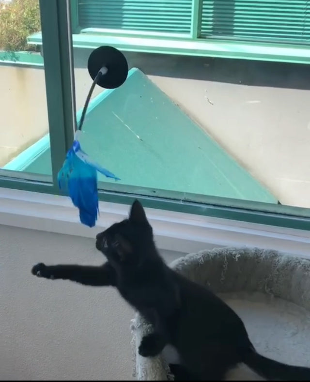 pidan Cat Teaser with Suction Cup