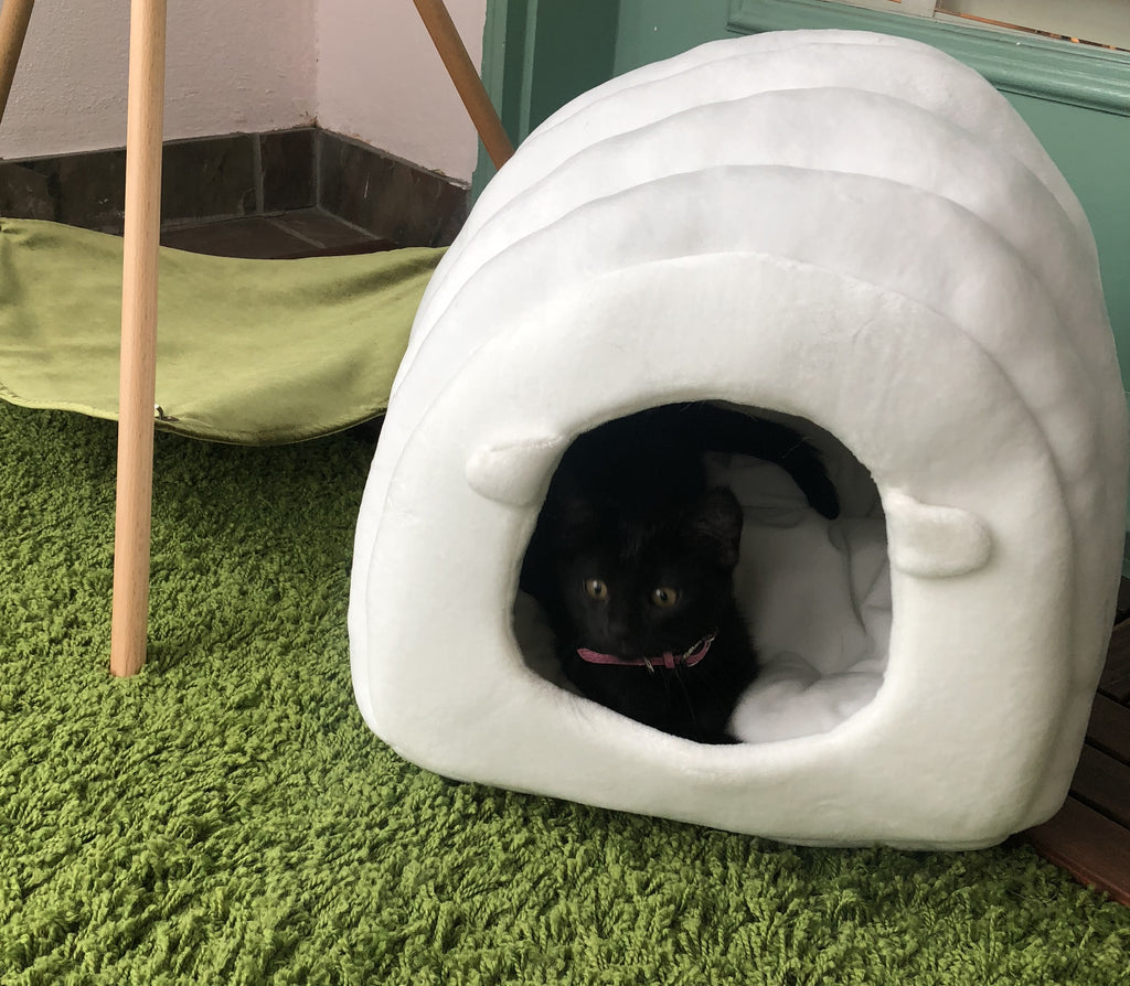 Petite's new nest- pidan Sheep Nest