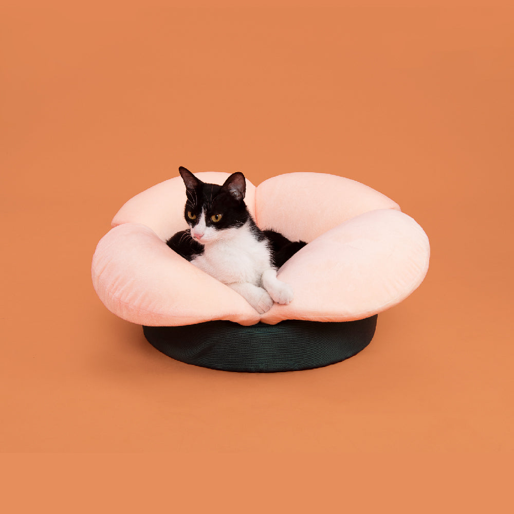 Cat Bed, Cooling Pad, Furniture, and Climbers