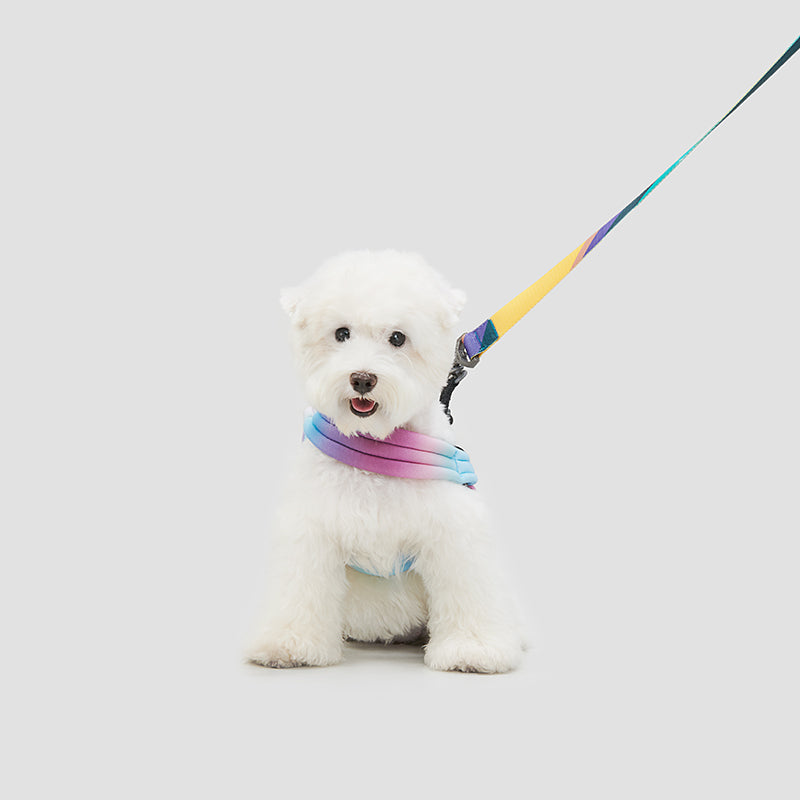 pidan Pet Harness for Dog
