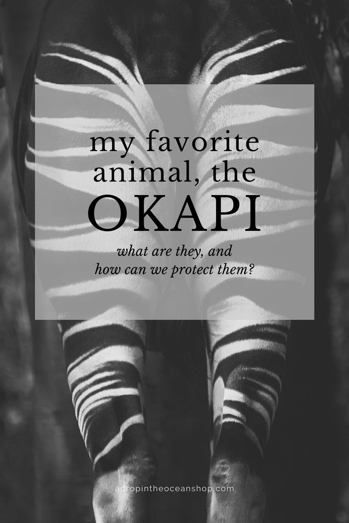 A Drop in the Ocean Tacoma Zero Waste Sustainable Living Blog What are okapi and how can we protect okapi?
